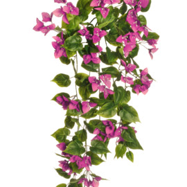BOUGAINVILLEA HANGING BUSH X 10,90CM
