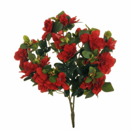 AZALEA BUSH X 3,41CM RED