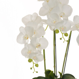 PHALAENOPSIS REAL TOUCH PLANT 16CM W/15 WHITE CM 62