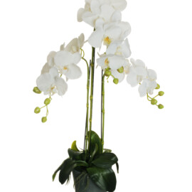 PHALAENOPSIS REAL TOUCH PLANT IN VASO D.16XH15 CM BIANCO