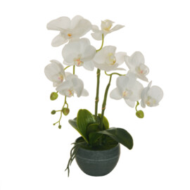 PHALAENOPSIS REAL TOUCH PLANT IN VASO D.13XH8 CM BIANCO